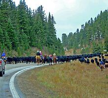 Roadblock, Highway 85, South Dakota by Margaret  Hyde