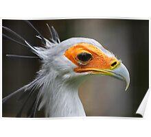 Secretary Bird Poster