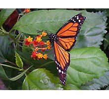 Orange wings Photographic Print