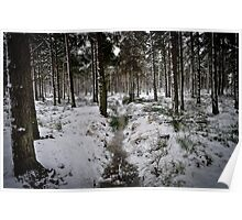 Forest in Winter - Near Culross Poster