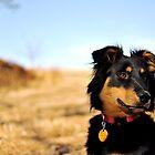 Pretty Pretty Puppy by Megan Alexandra Hoffman