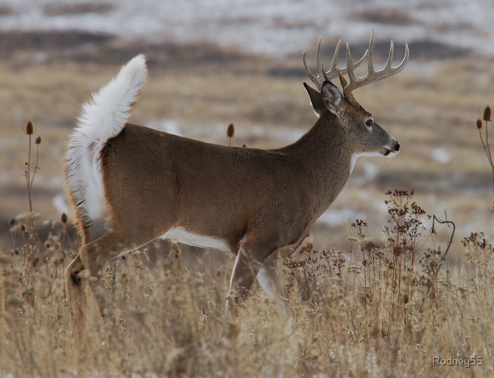 whitetail escape by Rodney55