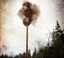 Cattail explosion by Olga