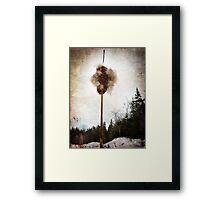 Cattail explosion Framed Print
