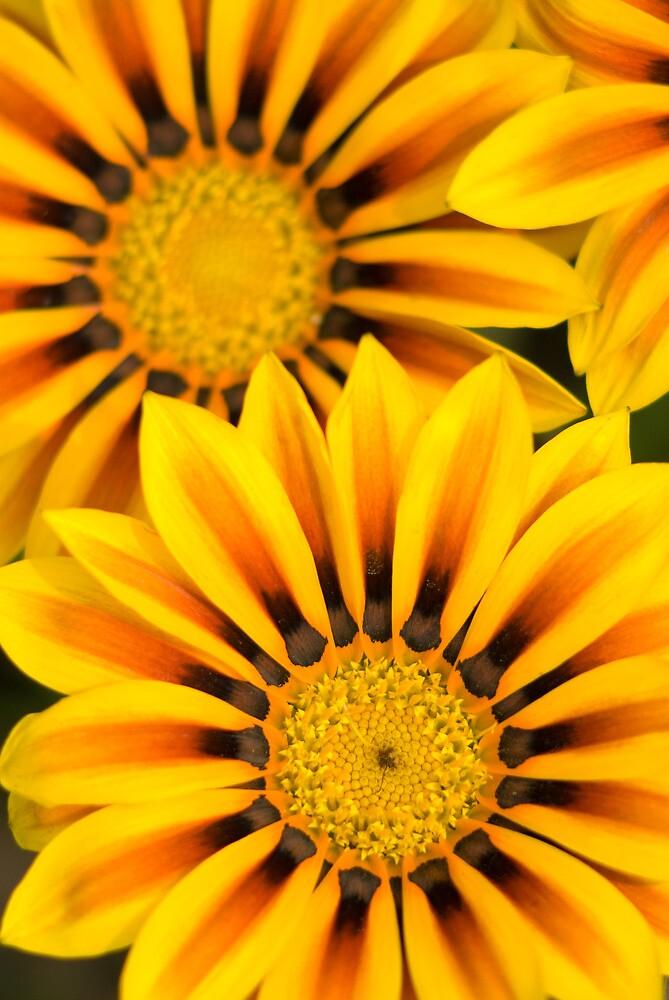 Sunny sunny sunny by Igor Mazulev
