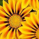 Close up to flowers 2011 by Igor Mazulev