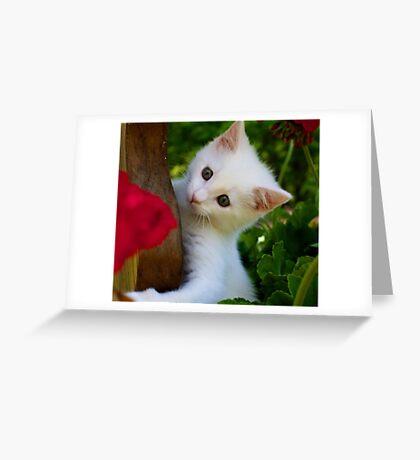 Kitten in Flower Pot Greeting Card