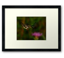 Black and Yellow Garden Spider High Wire Act Framed Print