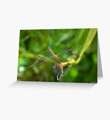 Golden Dragon Greeting Card