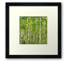 birch I Framed Print