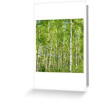birch I Greeting Card