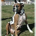 Kow Dog by Loree McComb