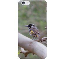 New Holland Honeyeater iPhone Case/Skin