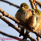 Happy Valentine&#x27;s Day - Silvereye - NZ by AndreaEL