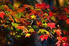 Colors of Autumn by Joe Elliott