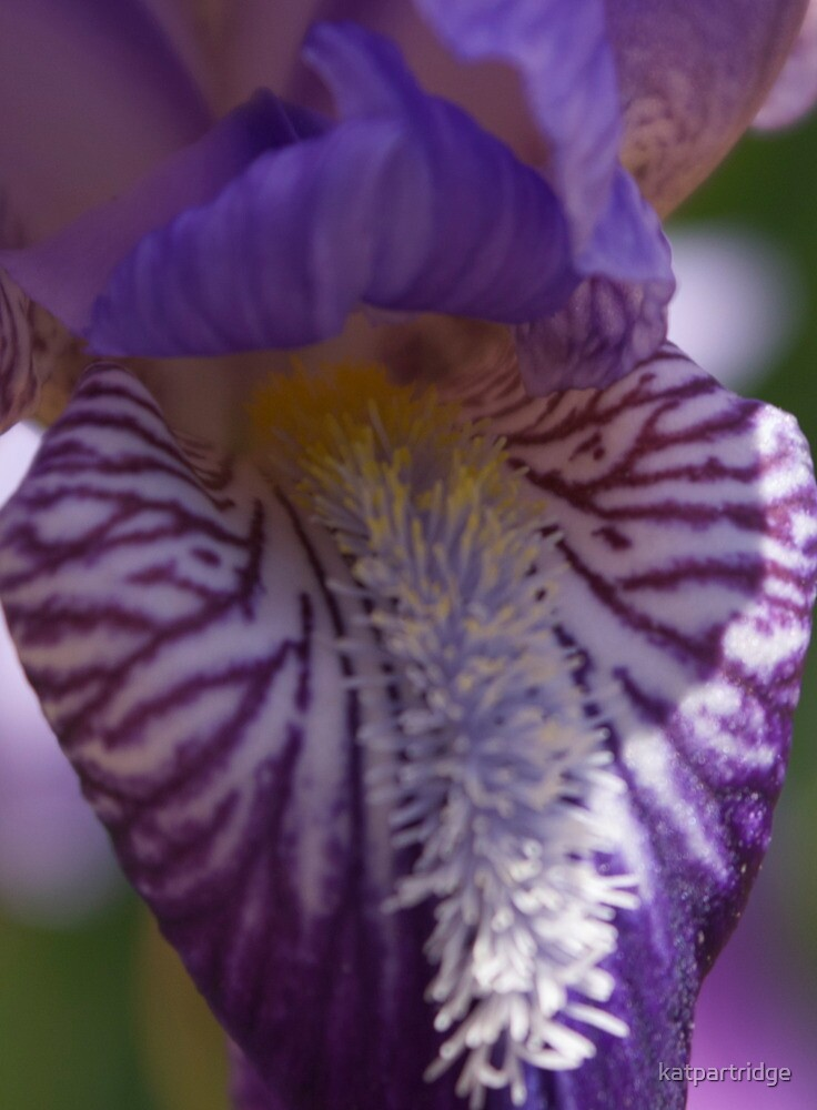 the eye of the iris by katpartridge