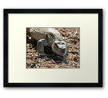 African Rock Monitor Framed Print