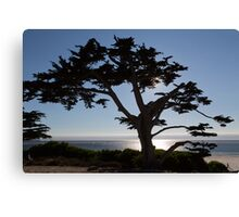 Sihouette of a Tree Canvas Print
