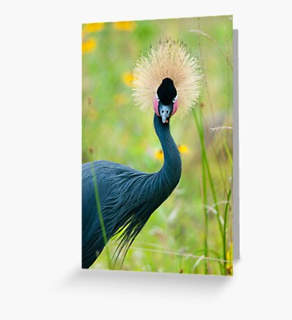 """Fancy Feathers"" - an african crowned crane Greeting Card"