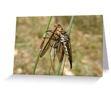 robber fly feast Greeting Card