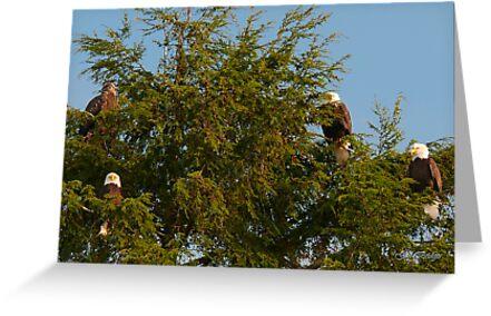 Four Bald Eagles by Gail Bridger