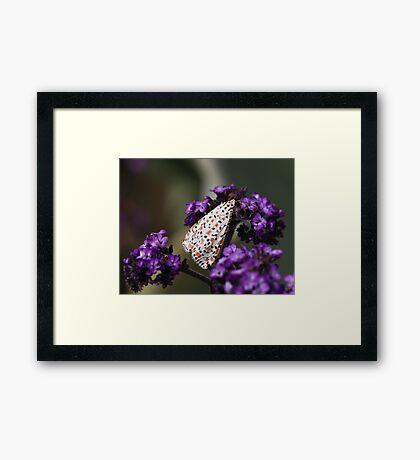 Crimson-speckled moth Framed Print