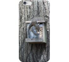 Squirrel on Feeder iPhone Case/Skin