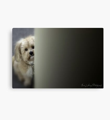 Please Let Me In? Canvas Print