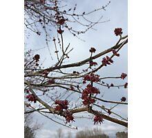 Frozen Flower Buds Photographic Print