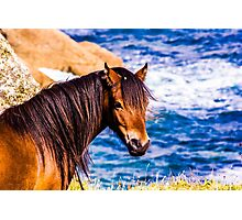 Logan Rock Horse Photographic Print