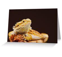 Central Bearded Dragon (Pogona vitticeps) Greeting Card