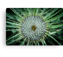 Scottish Thistle - Close Up Canvas Print