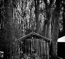 Old Shed - Scotland by Tristan Hopkins