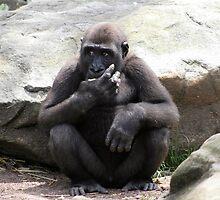 Western Lowland Gorilla by Deb22