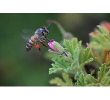 Pollen Payload  Photographic Print