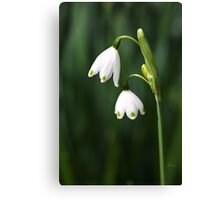 Snowdrops Painted Finger Nails Canvas Print