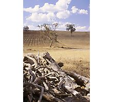 vineyard Photographic Print