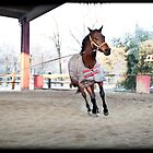 horse training by fabioberetta