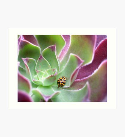 Ladybird in Aeonium Art Print