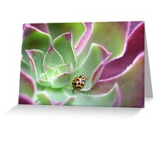 Ladybird in Aeonium Greeting Card
