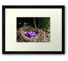 Dianella Eggs Framed Print