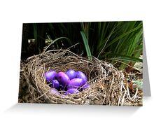 Dianella Eggs Greeting Card