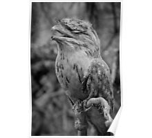 Tawny Frogmouth BW Poster