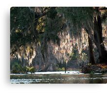 Sun and Spanish Moss Canvas Print