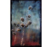 Little Snow Flower Photographic Print