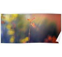 Sunset Flower Poster
