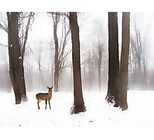 As Winter Calls Photographic Print
