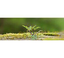 Miniatur Landscape Photographic Print