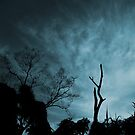 Sky by Digby