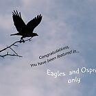 Eagles & Osprey Challenge by Geno Rugh